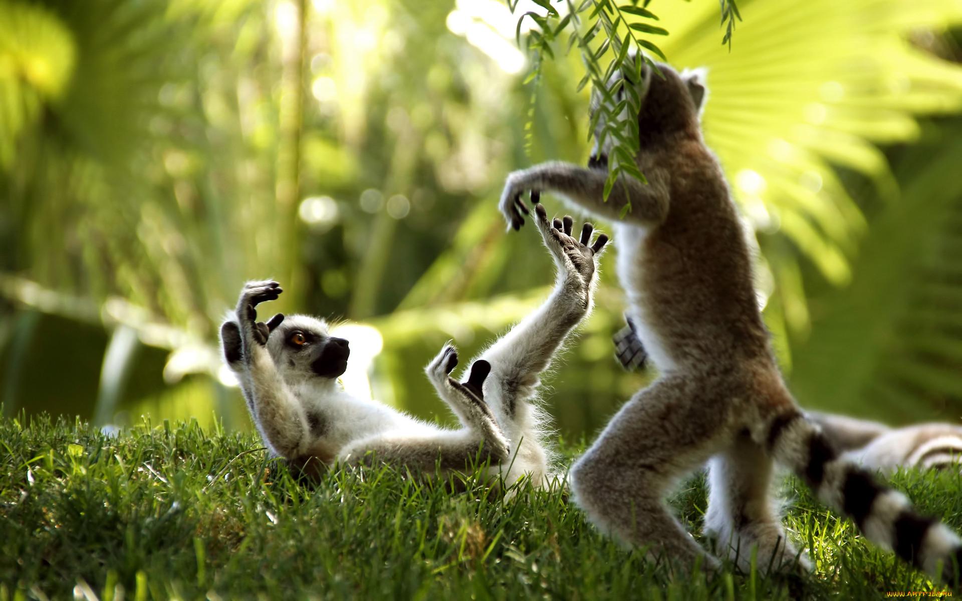 самым игры животных смешные картинки лет нынче